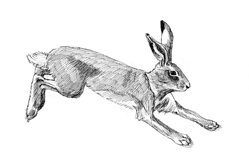 Simple black-and-white running hare tattoo design