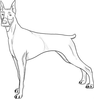Simple doberman dog tattoo design