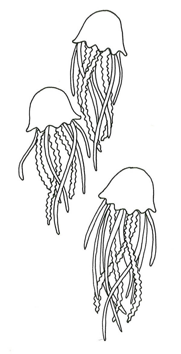 Simple jellyfish trio tattoo design