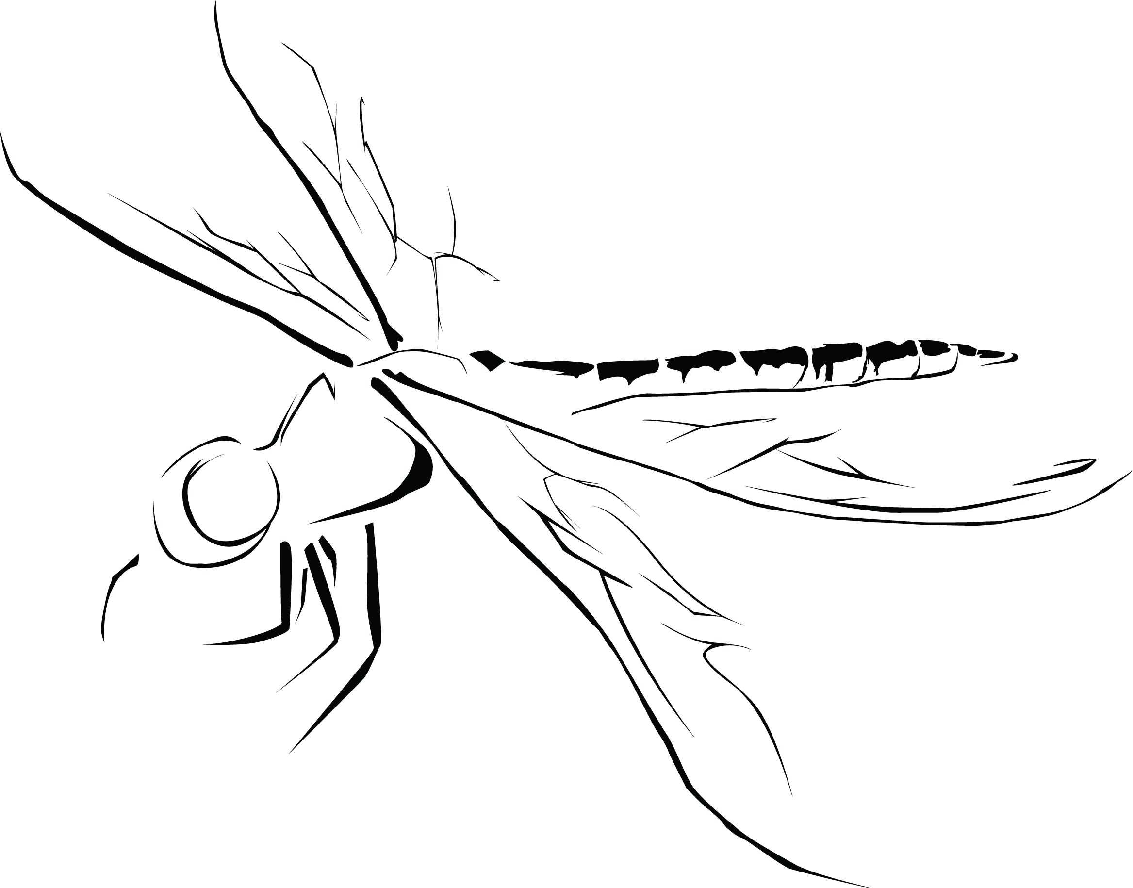 Dragonfly Tattoo Line Drawing : Simple outline flying dragonfly tattoo design