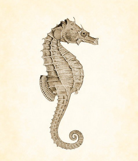 Single brown seahorse tattoo design