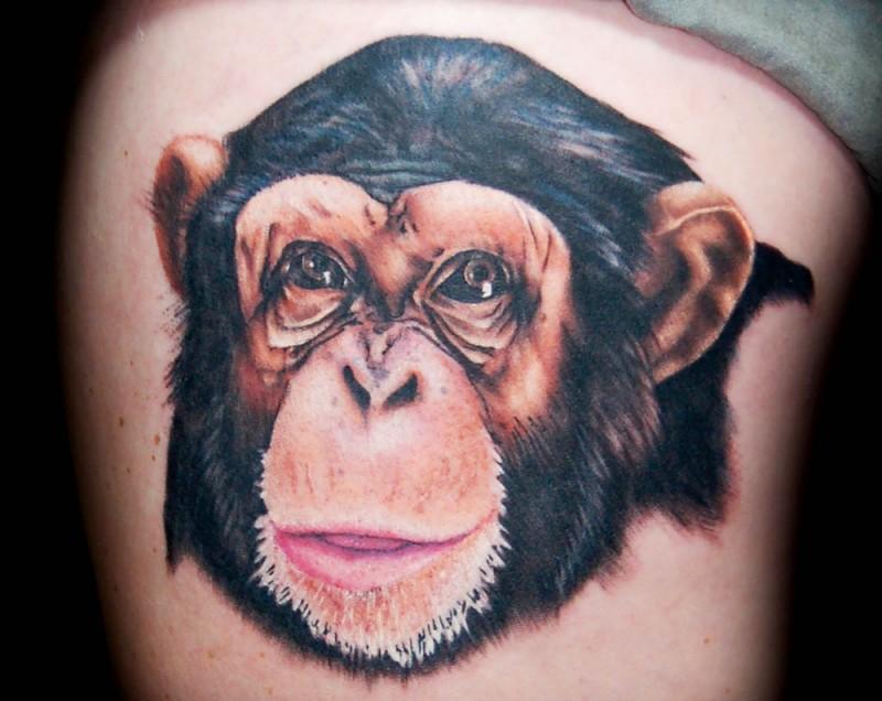 piccolo eccezionale colorato testa scimpanze` tatuaggio su lato