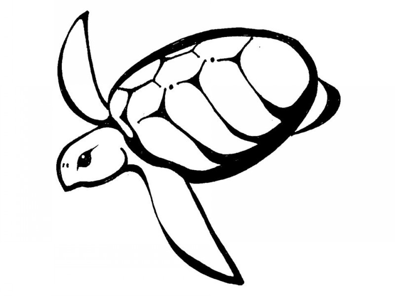 Small hawaiian turtle swimming down tattoo design
