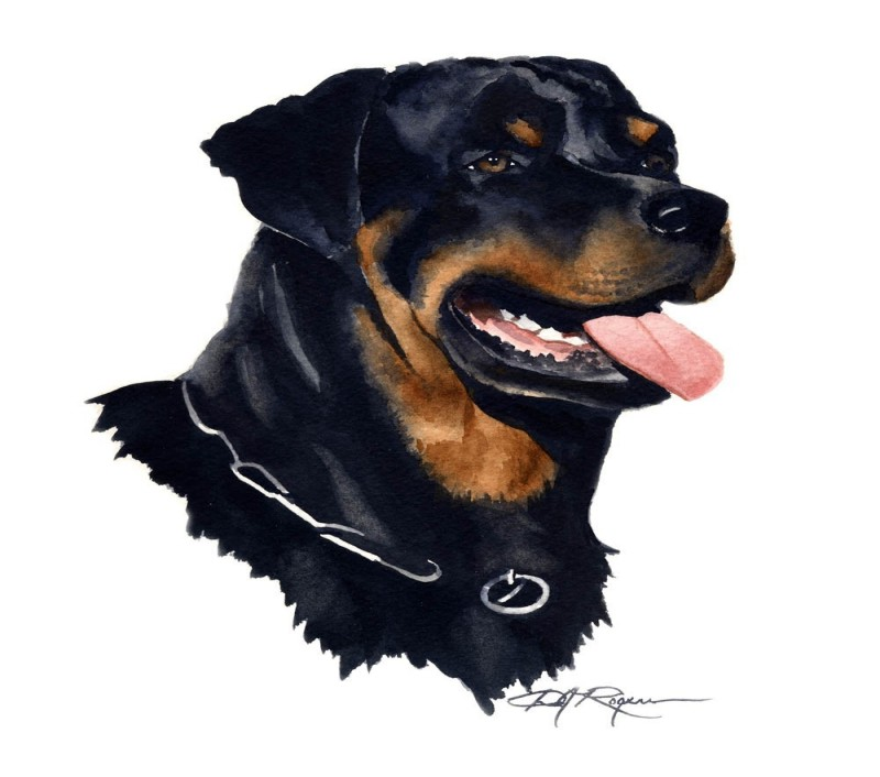 Splendid colorful rottweiler in profile tattoo design