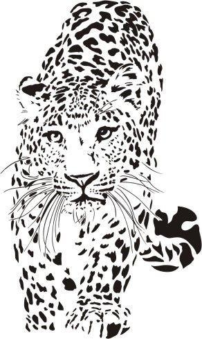 Splendid colorless walking jaguar tattoo design