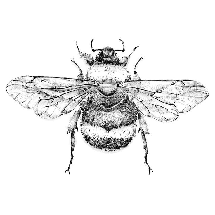 Splendid grey-color bee from back tattoo design