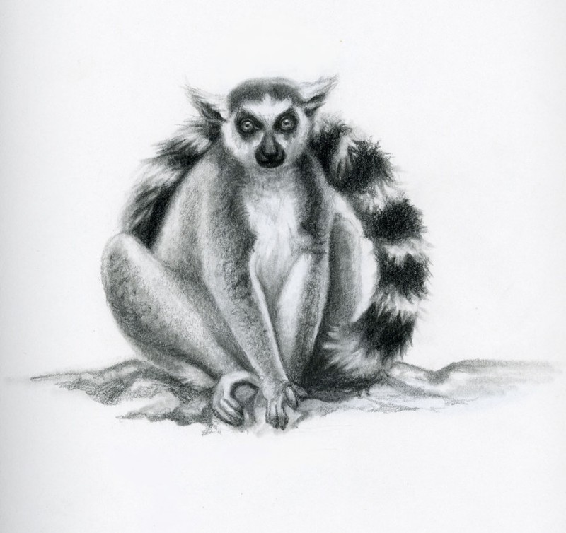 Splendid grey-ink sitting lemur tattoo design by Rebekahlynn