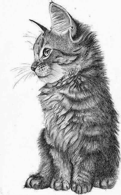 Splendid realistic black-and-white cat tattoo design