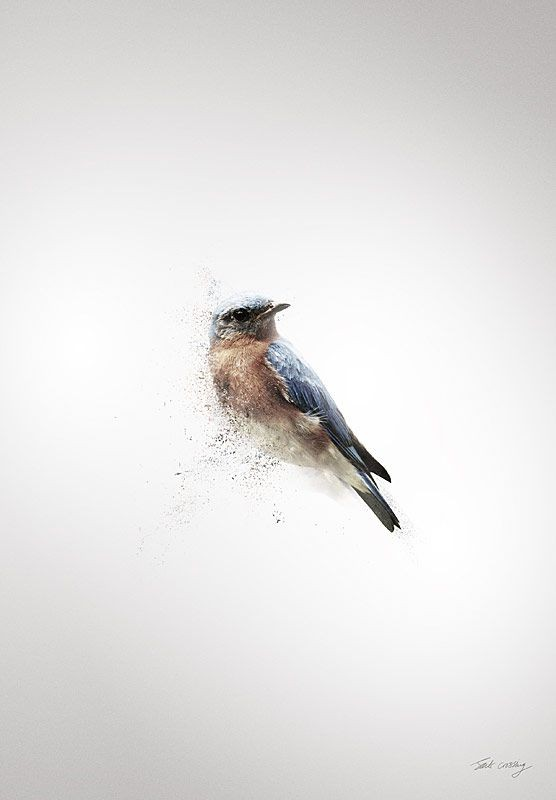 Splendid small blue sparrow with white chest tattoo design