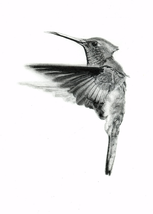 Static realistic black-and-white hummingbird tattoo design