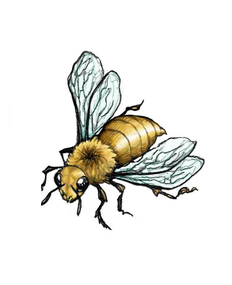 Stripeless full-yellow bee with pale-blue wings tattoo design by Smocksinabox