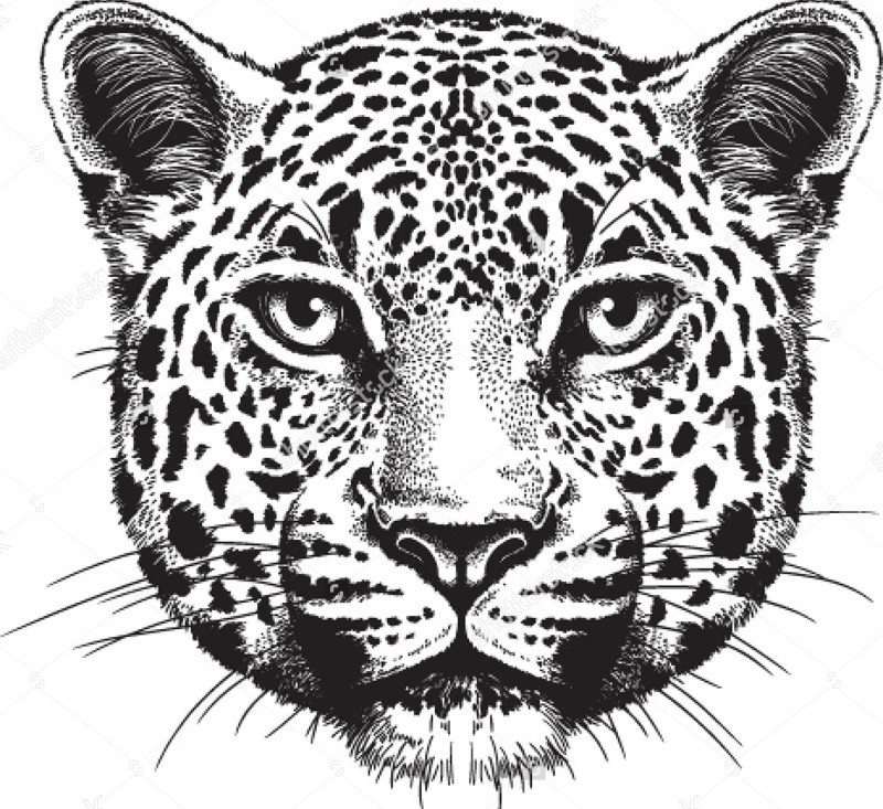 Super black-and-white jaguar face tattoo design