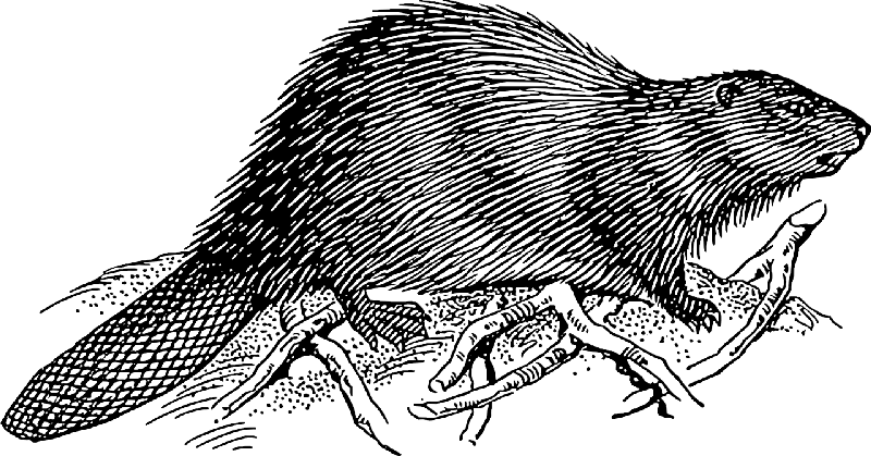 Super black-and-white rodent running on branched ground tattoo design