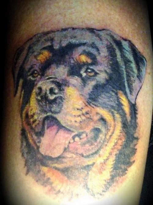 bellissimo colorato testa rottweiler tatuaggio