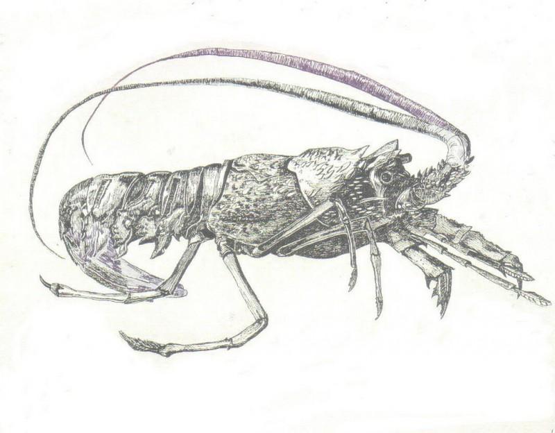 Superb grey-ink lobster water animal tattoo design