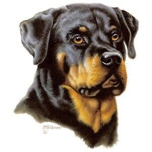 Sweet realistic colorful rottweiler tattoo design