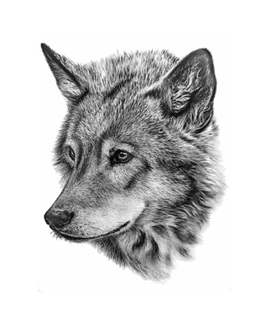 Sweet Realistic Drawn Wolf Head Design Tattooimages Biz