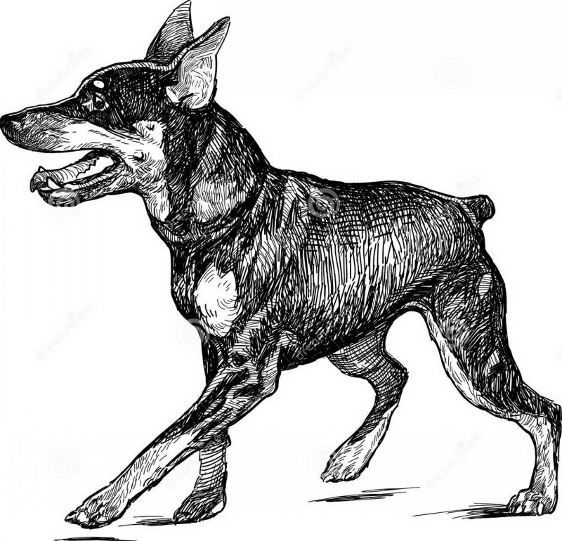 Sweet walking puppy doberman tattoo design