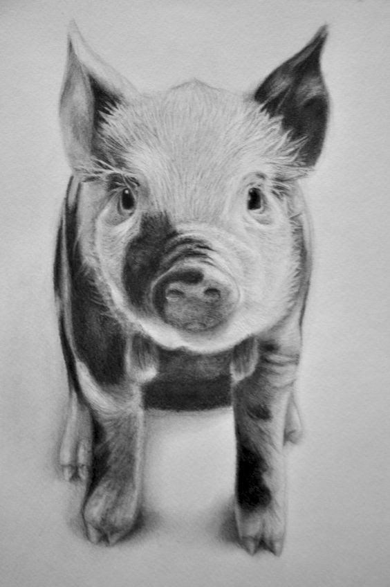 Line Drawing Of A Pig Face : Tender black and white standing pig baby tattoo design