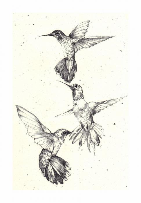hummingbird images black and white. Black Bedroom Furniture Sets. Home Design Ideas