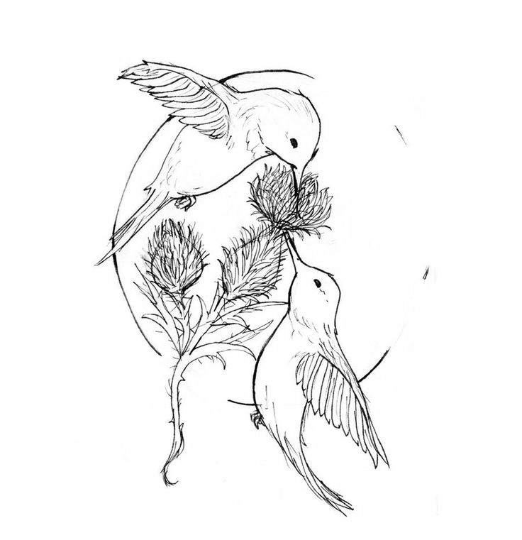 Uncolored hummingbird couple sniffing the agrimony bud tattoo design