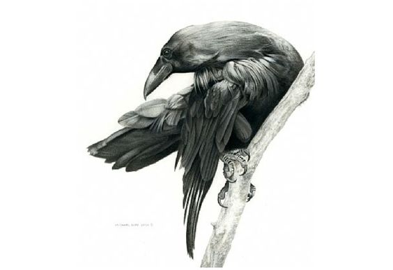 Waiting raven on thick tree branch tattoo design