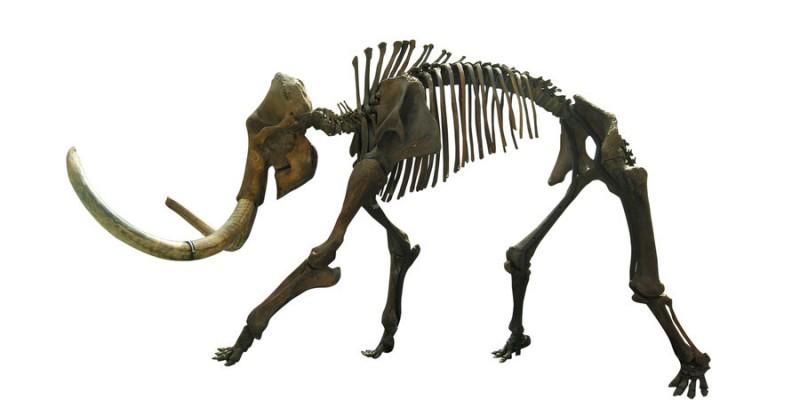 Wild brown-ink running mammoth skeleton tattoo design by El Cabrito
