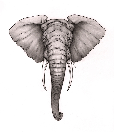 Wonderful grey elephant head tattoo design