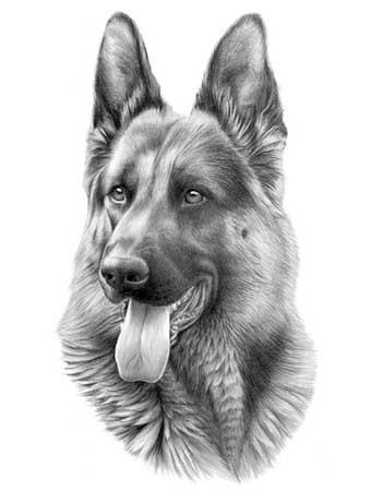 Wonderful realistic grey-ink german shepherd portrait tattoo design