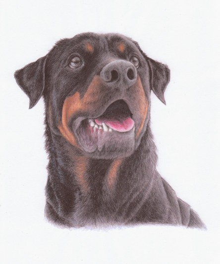 Wonderful rottweiler in brown colors tattoo design by Naragon