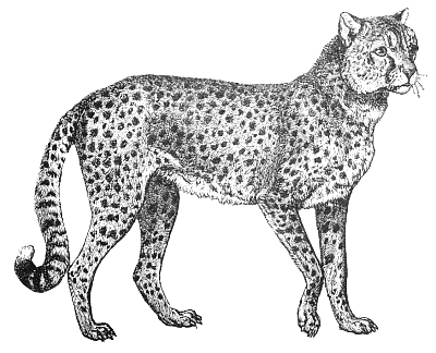 Worried grey-ink static cheetah tattoo design