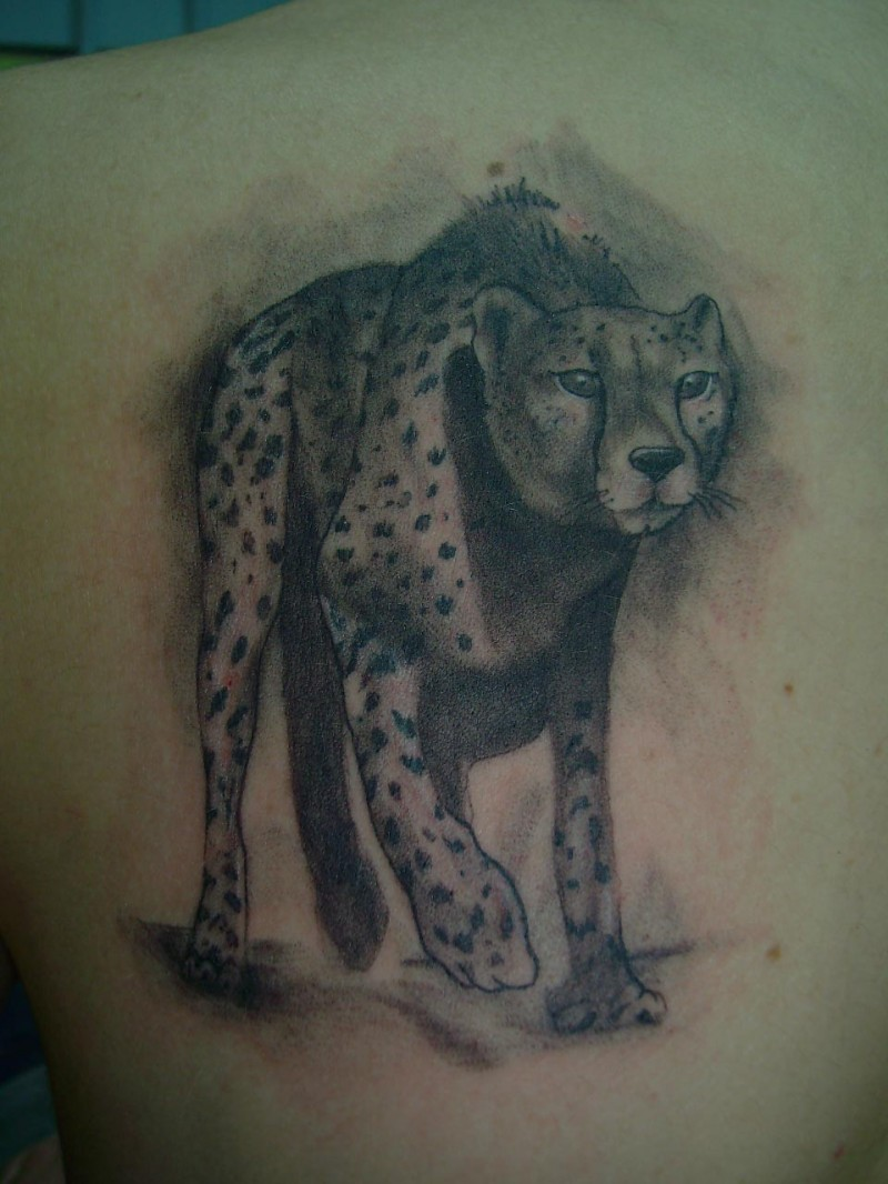 Amazing gray-ink cheetah in full size tattoo