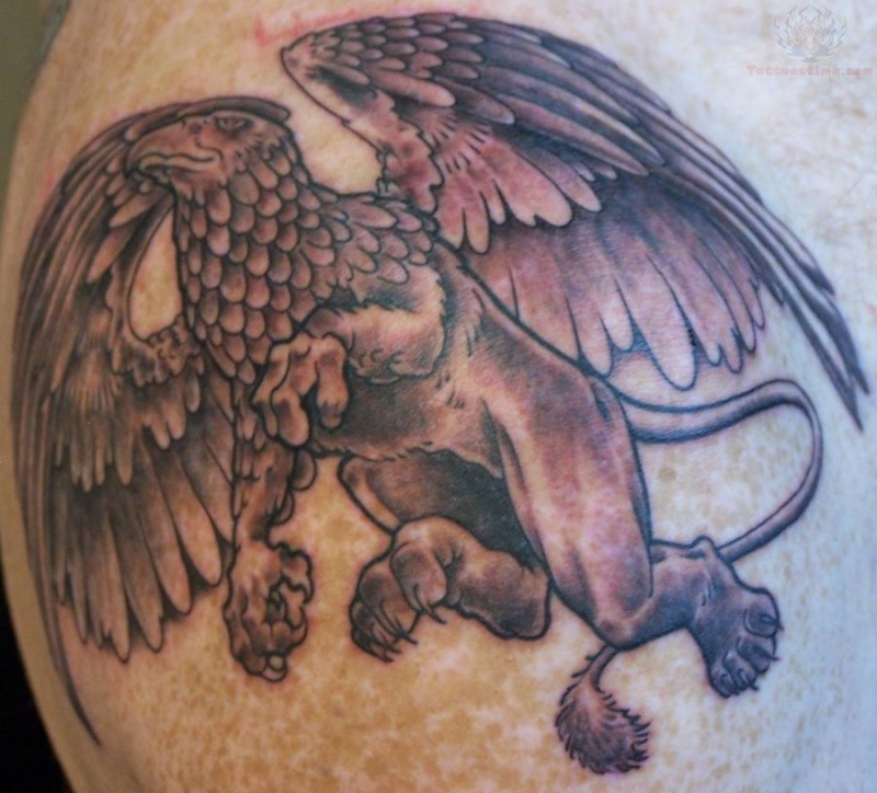 Amazing ink griffin tattoo on skin