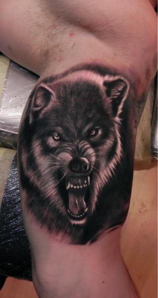 Angry portrait wolf face tattoo on arm
