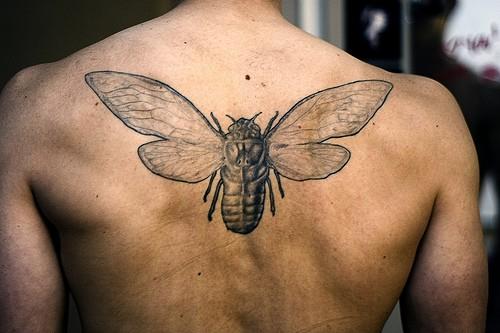 Tatuaggio grande sulla schiena l&quotinsetto nero