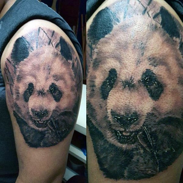 Black and gray style colored shoulder tattoo of cute eating panda