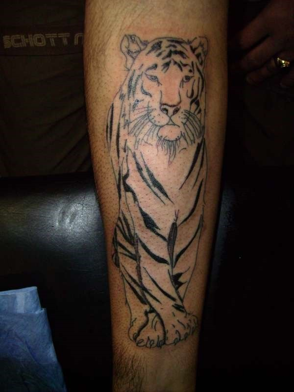 Carelessly painted black and white forearm tattoo of rare tiger