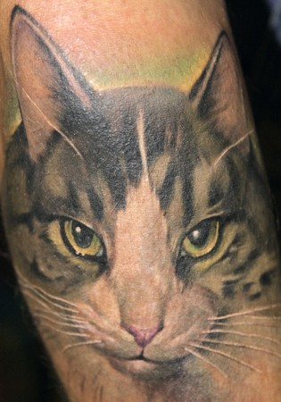 Realistic colourful cat tattoo