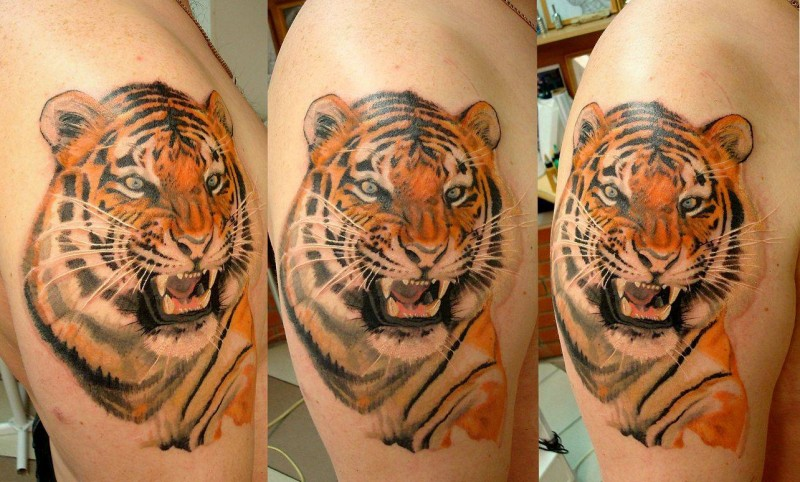 Colored shoulder tattoo of roaring tiger head
