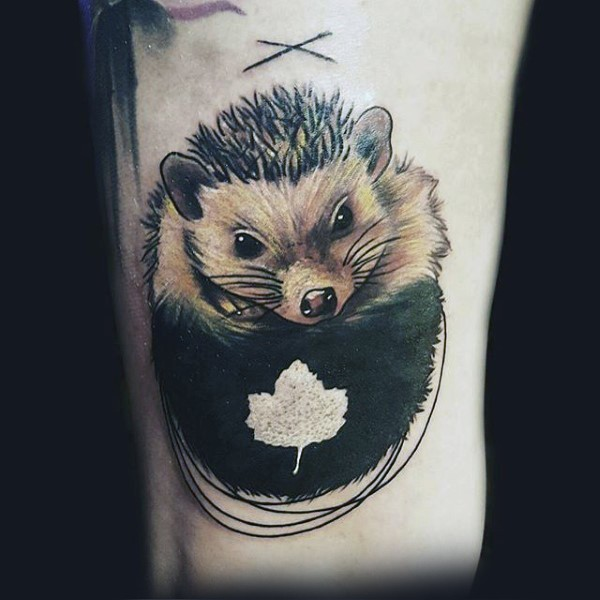 Cute little colored hedgehog with maple leaf tattoo on arm