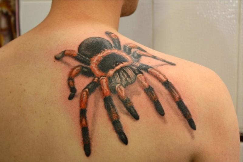 Great colorful tarantula on back