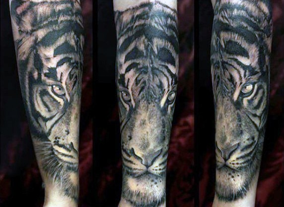Illustrative style colored steady tiger tattoo on forearm