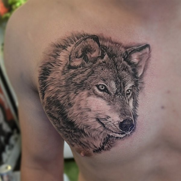 Incredible 3D realistic lifelike naturally colored wolf tattoo on chest