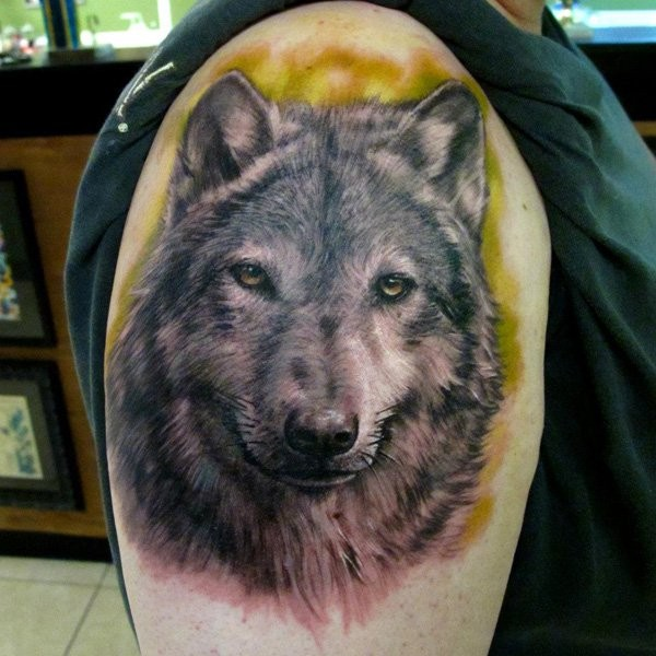Incredible lifelike 3D realistic naturally colored wolf&quots portrait tattoo on upper arm