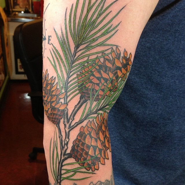 Incredibly realistic pine tree branch with cones colored tattoo on arm