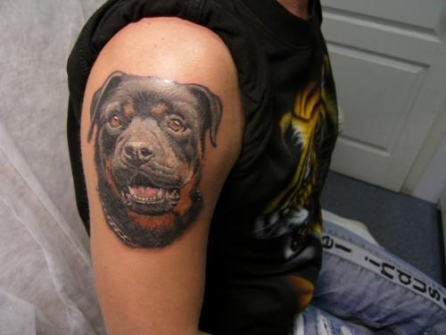 Tatuaggio carino sul deltoide la testa del rottweiler