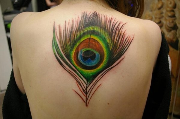 Large very beautiful colored peacock feather tattoo on upper back