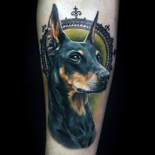 Magnificent 3D realistic naturally colored Doberman&quots portrait tattoo with old frame