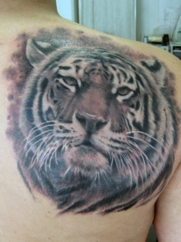 Magnificent detailed steady looking tiger portrait tattoo on shoulder