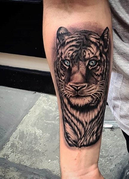 New school style colored forearm tattoo of beautiful tiger